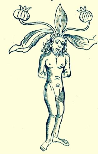 Fig. 7. Mandrake Root in Shape of a Man. See: C. Schneider. Der allgemeine und Krieger-Aberglaube…Wien, 1865, 313.